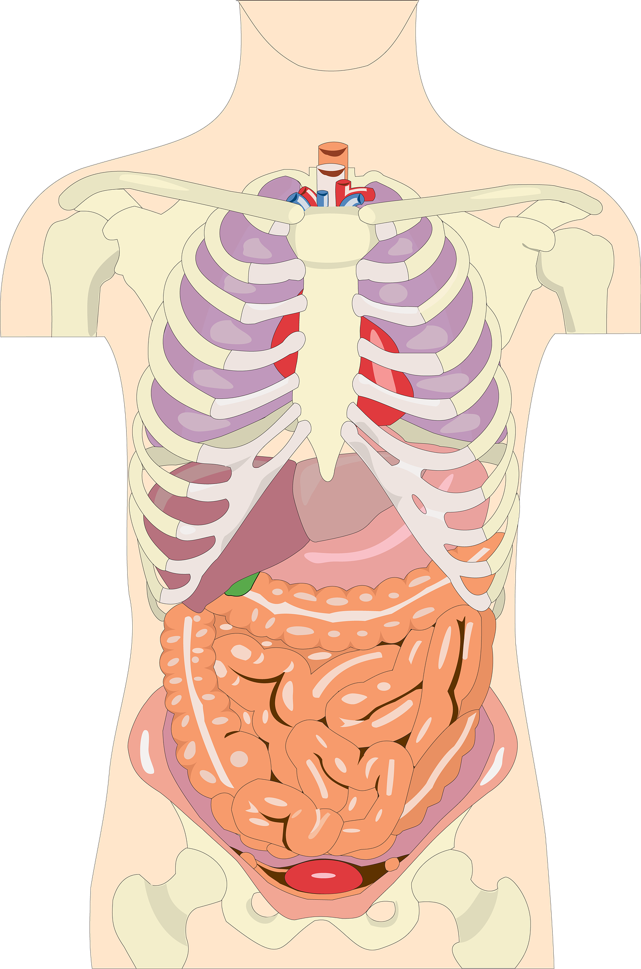 Life Systemshuman Organ Systems Grade 5 Science Technology