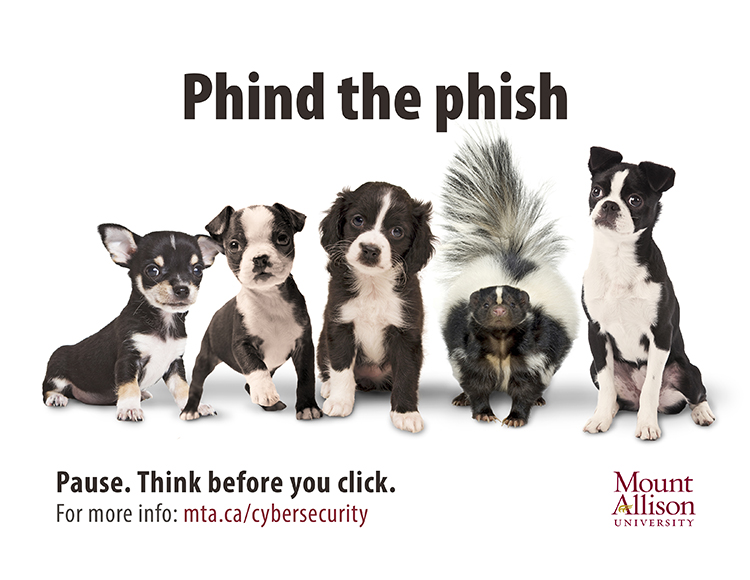 "Image of a skunk amid several dogs with the text ""phind the phish"""