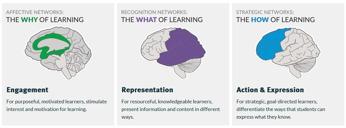 Affective Networks, the Why of Learning, Engagement. Recognition Networks The What of  Learning, Representation.  Strategic Networks, The How of Leaning, Action and Expression.