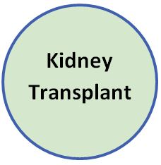 link to Kidney Transplant information
