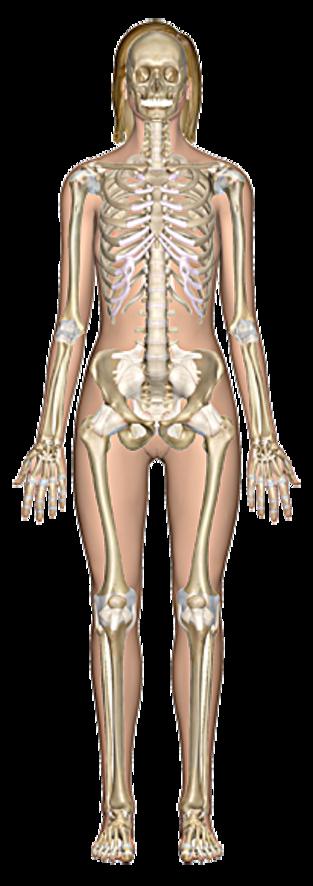 BIOL2203 (Human Anatomy) - Biology - LibGuides at Cape Breton University