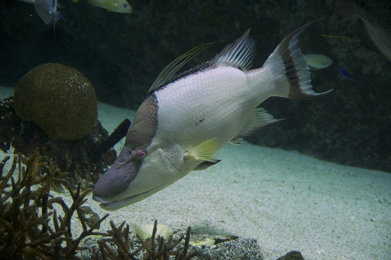 National Aquarium (USA)