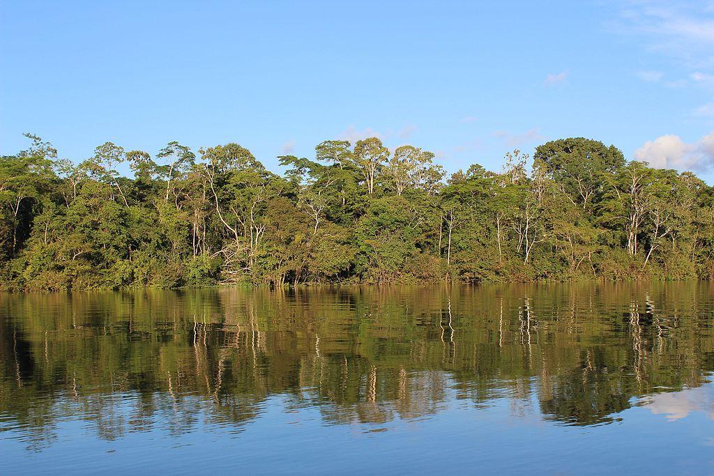 Amazon Rainforest (Image)