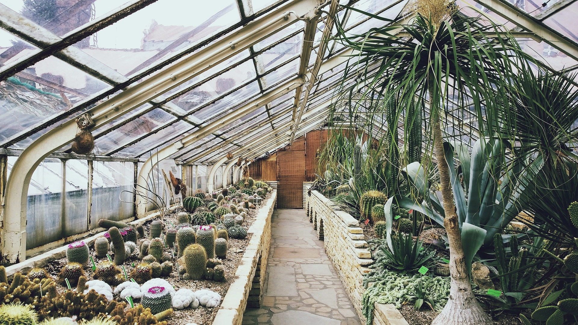 Greenhouse with cacti growing inside