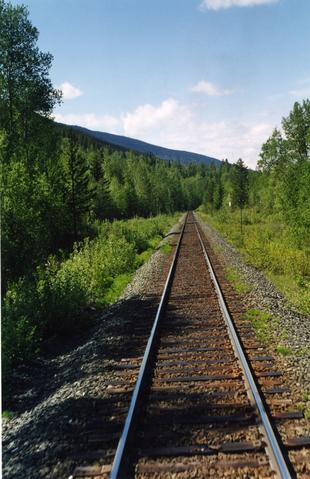 Railway tracks through a forest