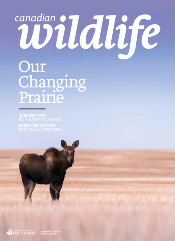 Moose standing on empty plain.