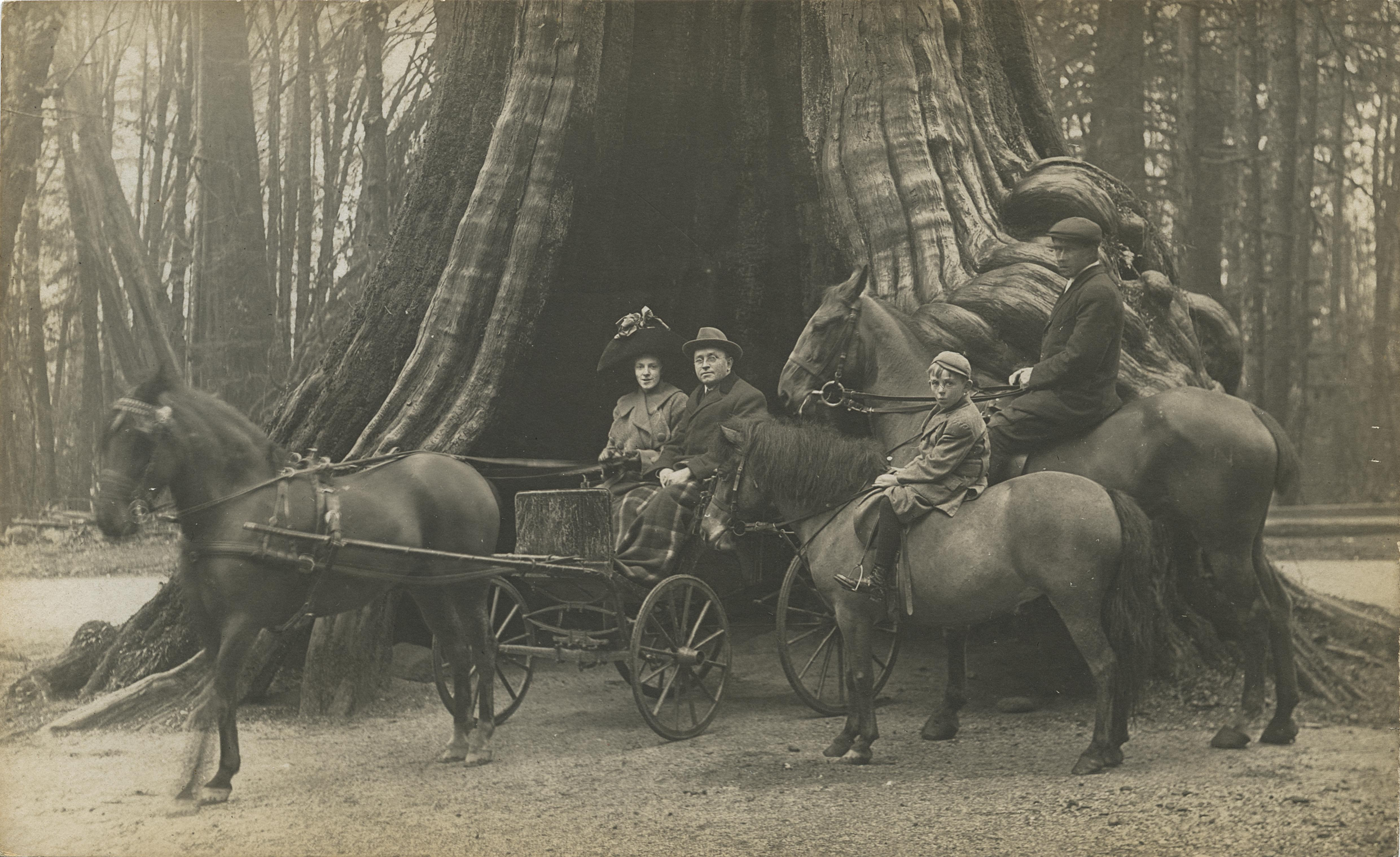 couple in horse drawn buggy in front of Stanley Park Hollow Tree