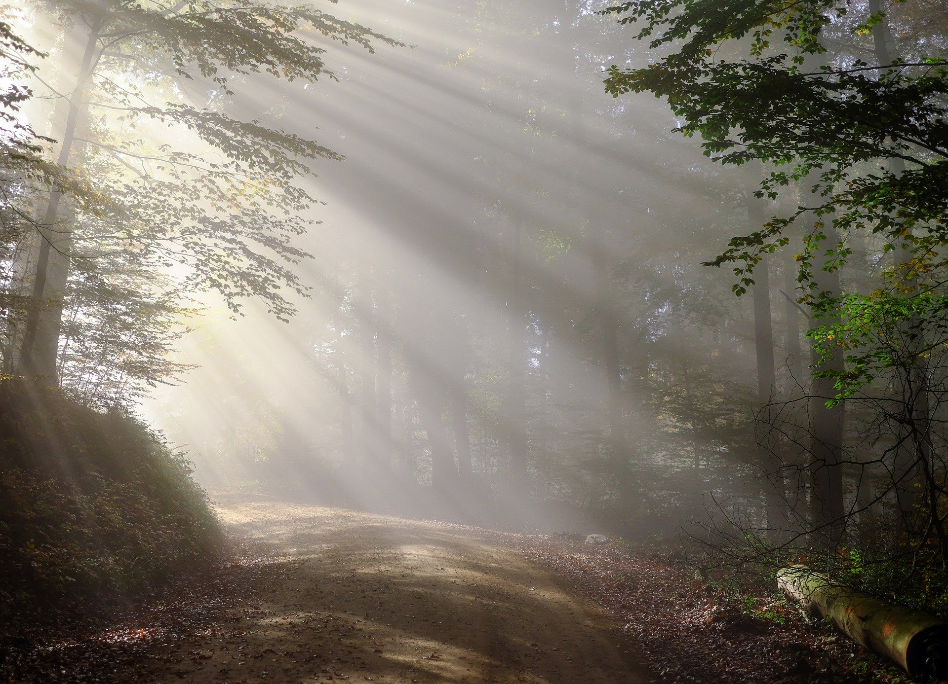 Morning in the woods. Path in boreal forest with sun emerging through fog around the corner as path bends to the left.