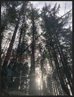 Book cover image of sunlight through the trees