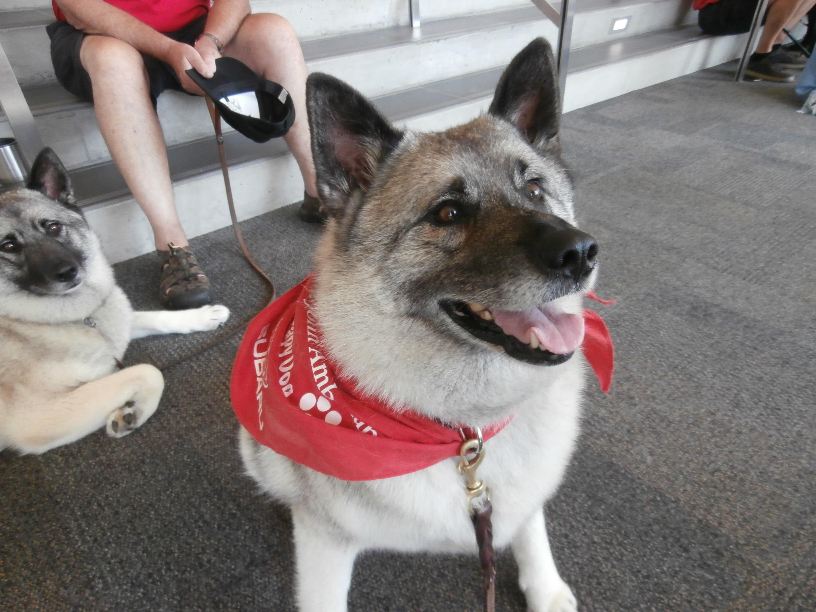 St. John Ambulance Therapy Dogs