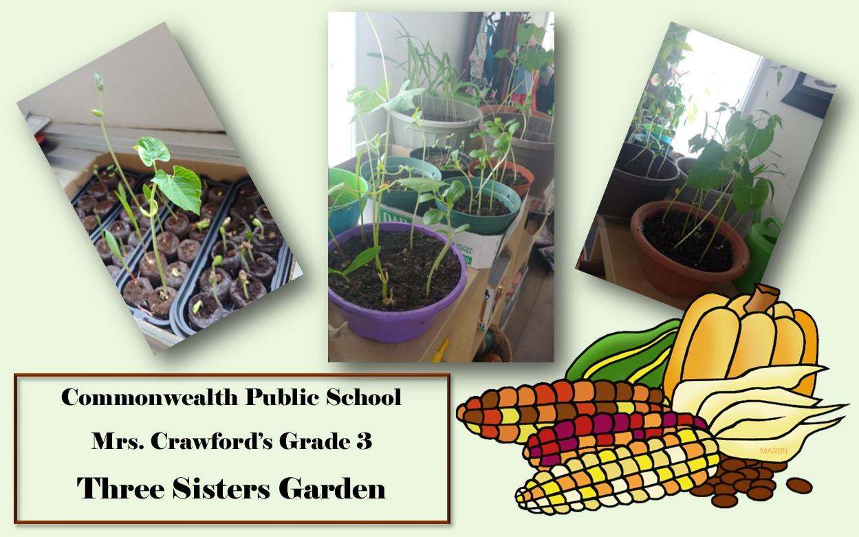 Corn, beans, and squash seedlings growing in pots.  Clipart of corn, beans, and squash in the bottom right corner.