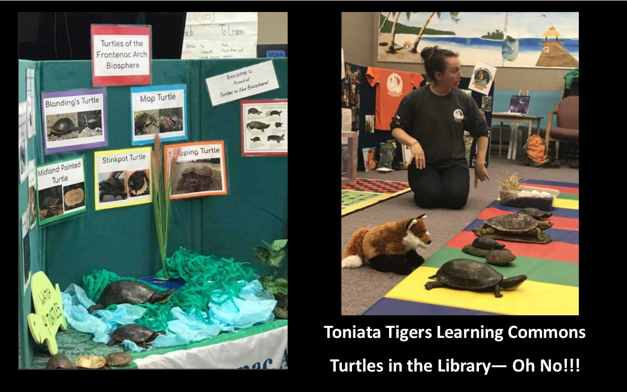 Display board with turtle information. Presenter showing turtles on the carpet.