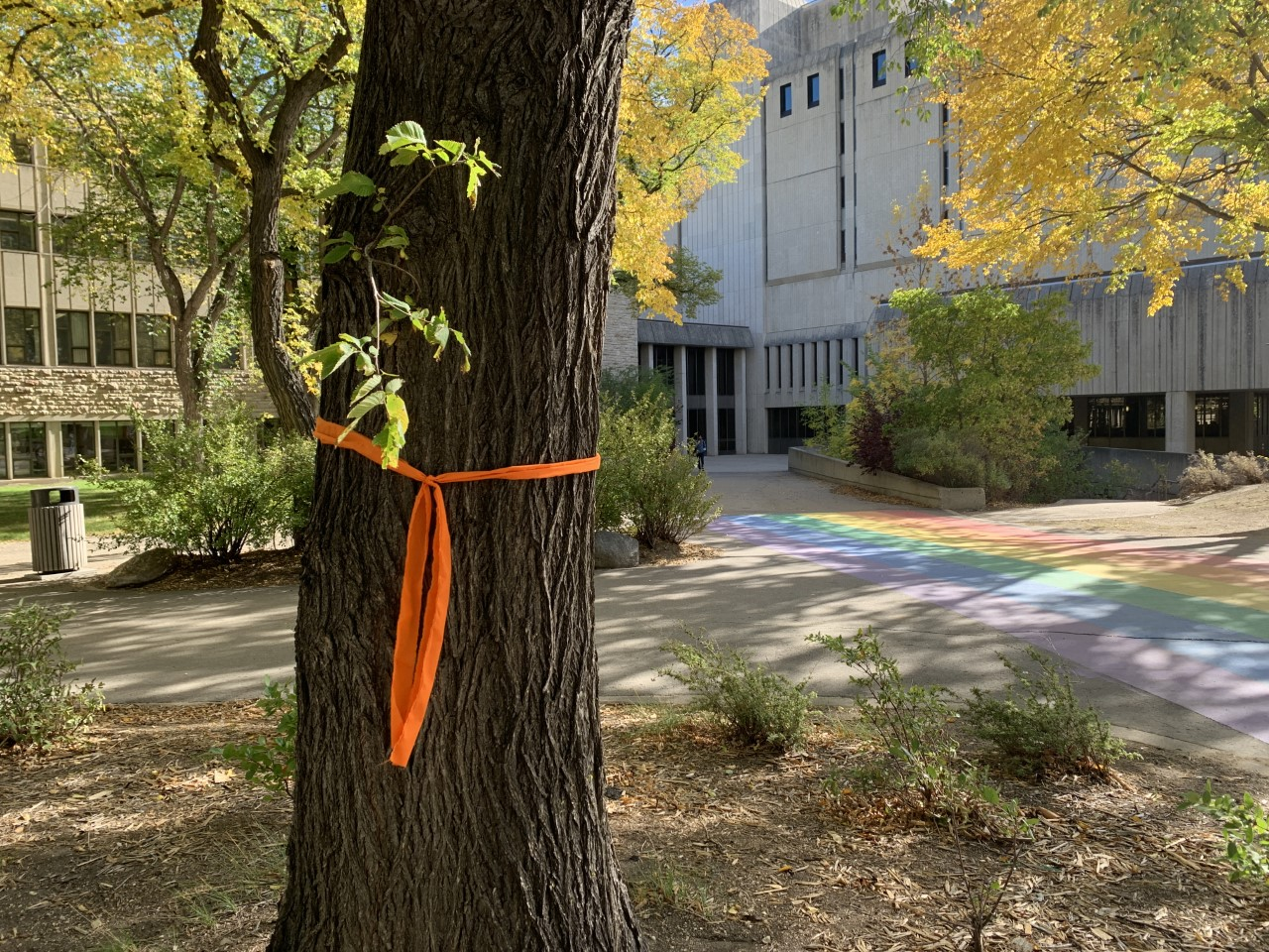 Orange Ribbon tied to a tree outside Murray