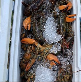 lobsters in box