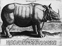 Rhinoceros from The Illustrated Bartsch, Vol. 56, 1586, by Philips Galle