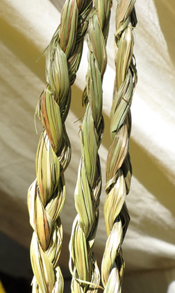 Photograph of three braids of sweetgrass.