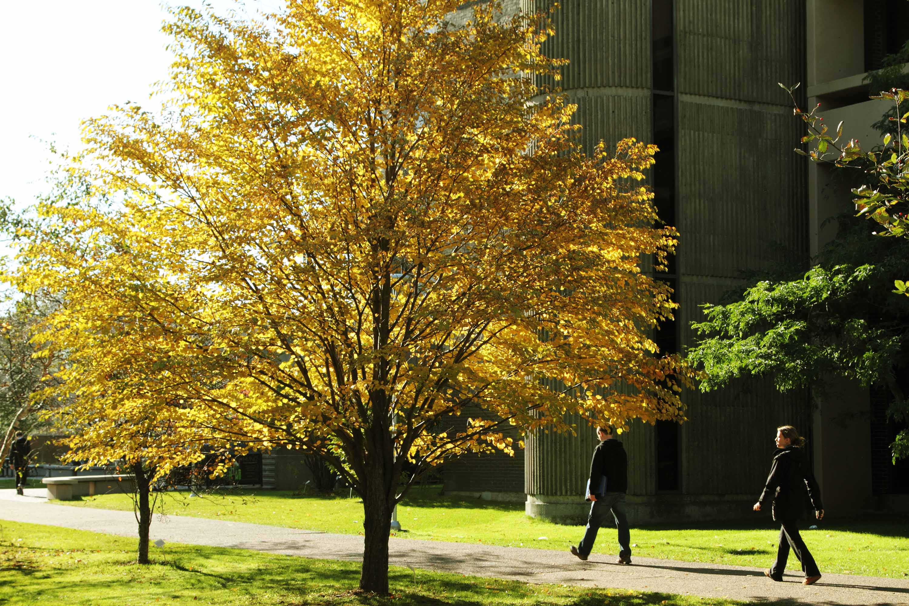 photo outside the library in the Fall