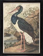 Black Stork 1805