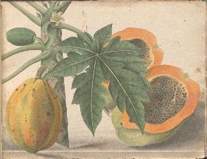DeRabié 1766