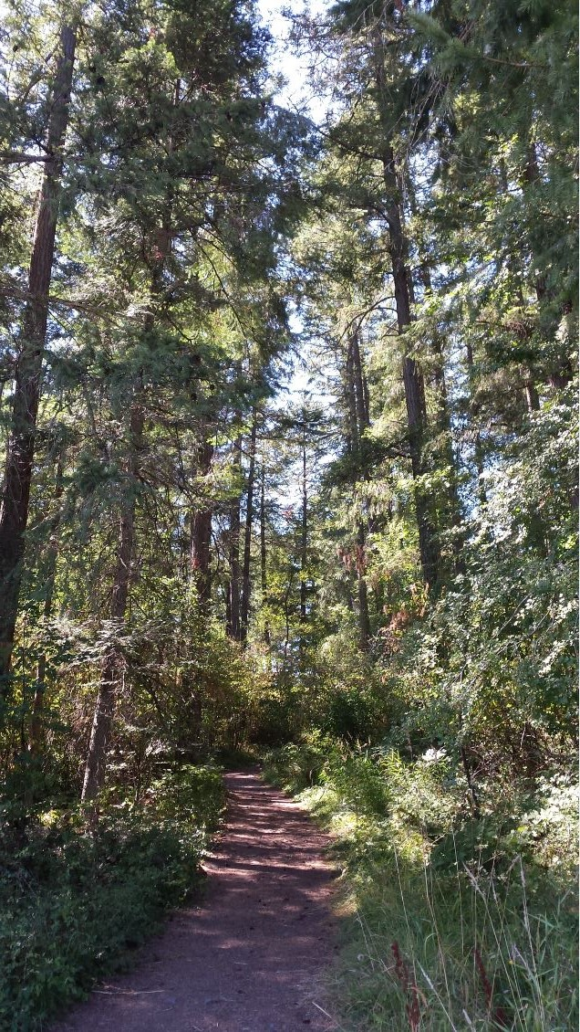 Image of a path into the tall shady trees on Interurban campus