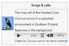 Screenshot of one birdsong box option: specific bird image and streaming link
