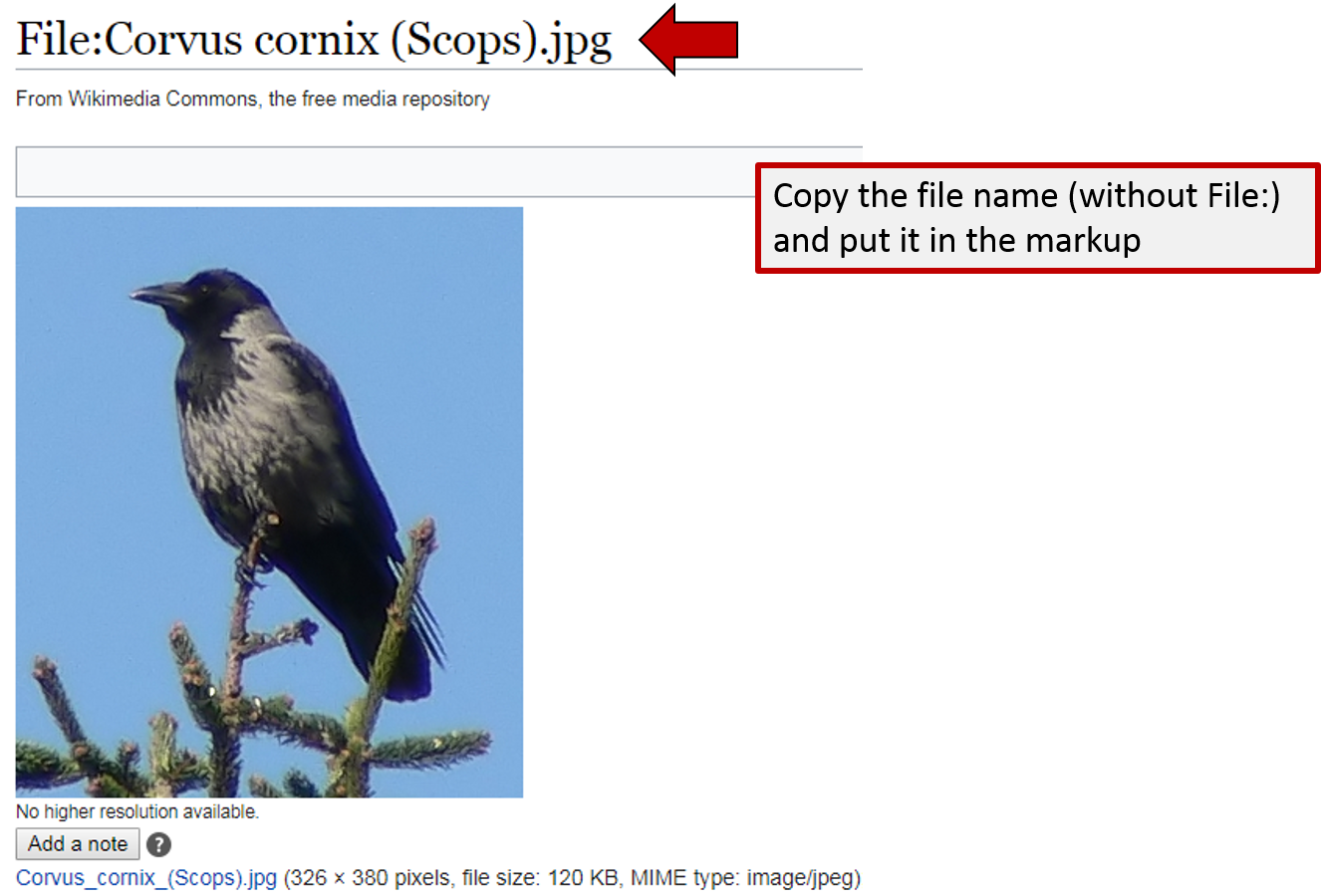 Screenshot of what to copy and paste from Wiki Commons for your bird image