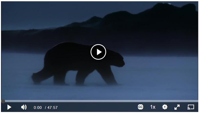 Winter Video Screenshot