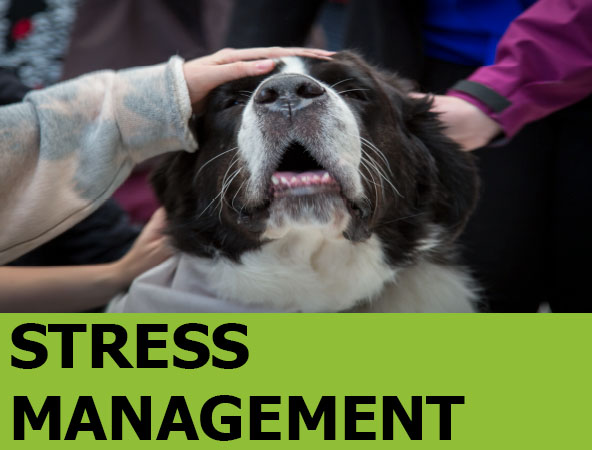 Image link to Stress Management Guide