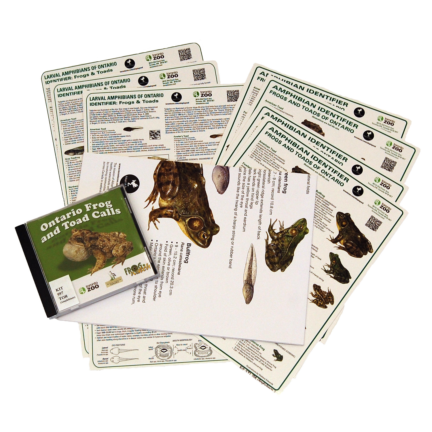 amphibians identifying cards and posters