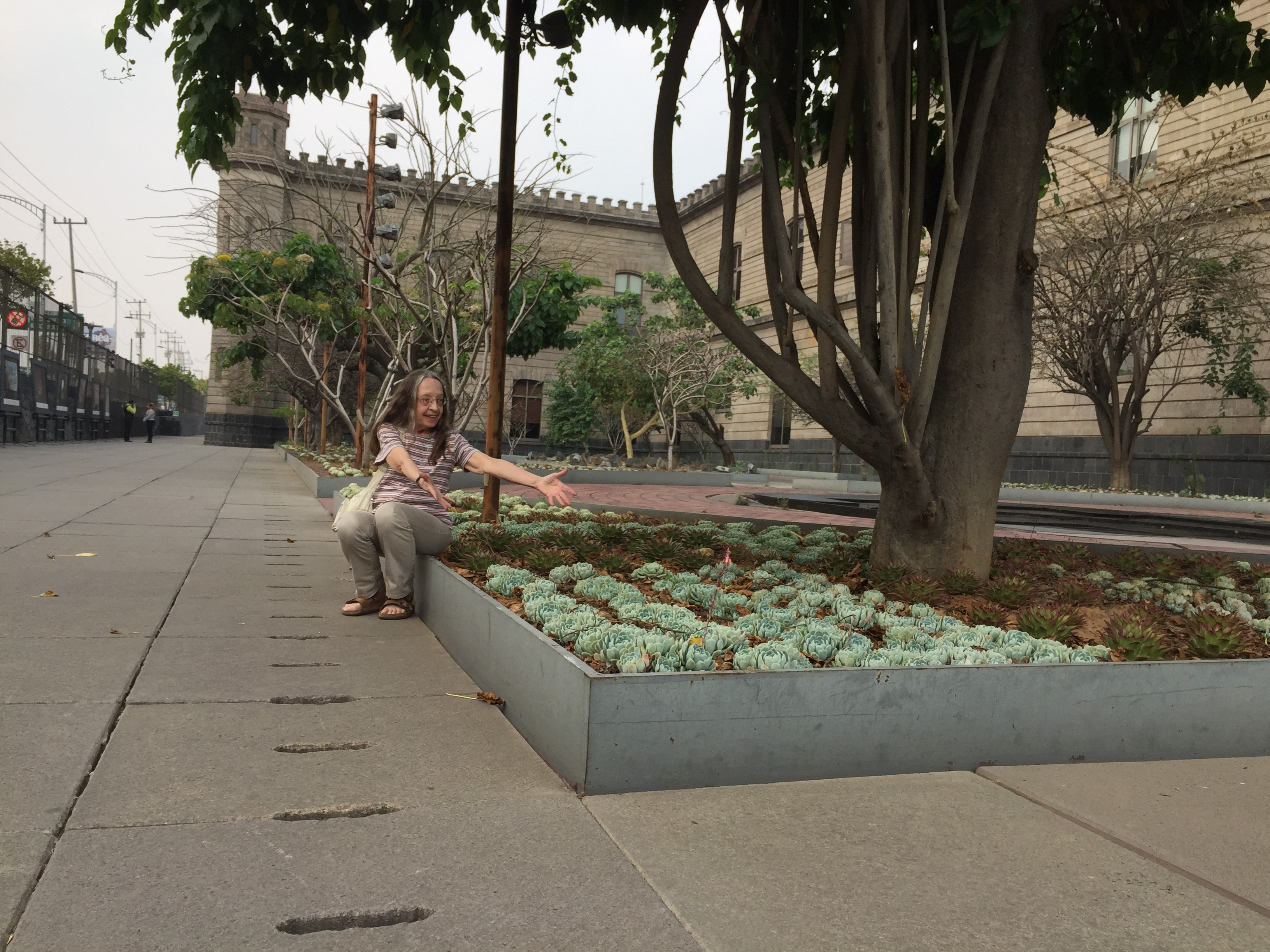 Researcher viewing cacti in Mexico City