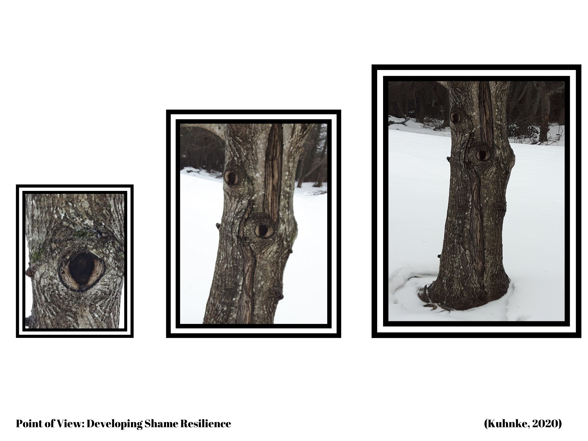 three tree trunks with different perspectives